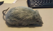 HAIRY RAT (9 inches with tail) - Toy