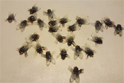 FLIES! (25 realistic, plastic flies) - Toy Collectibles